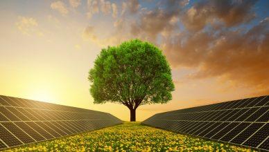 Árvore Solar é inaugurada em universidade do Ceará